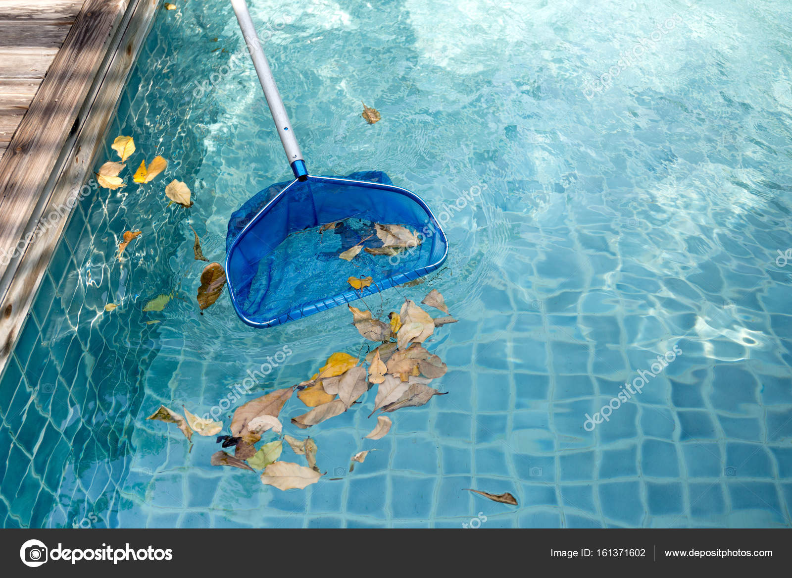 Cleaning swimming pool of fallen leaves with blue skimmer ...