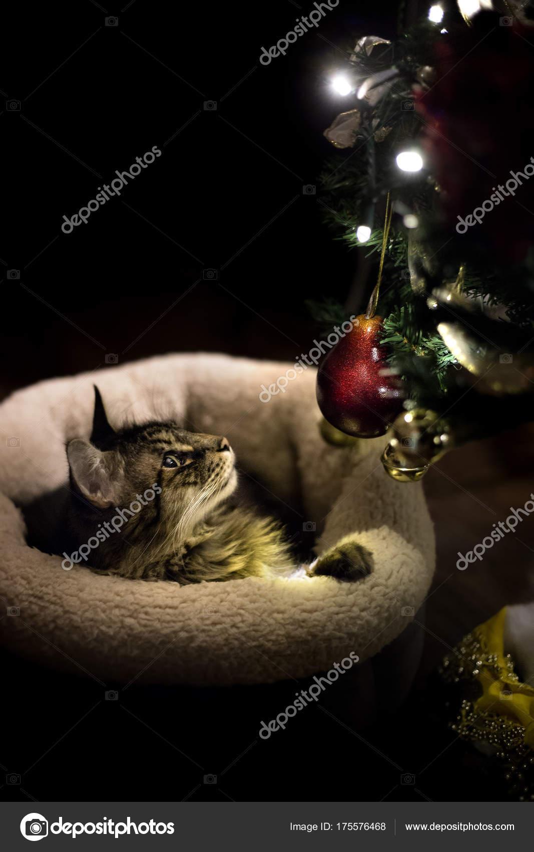 Кот том игра мультфильма мюридов кошка png скачать 3500*3500.