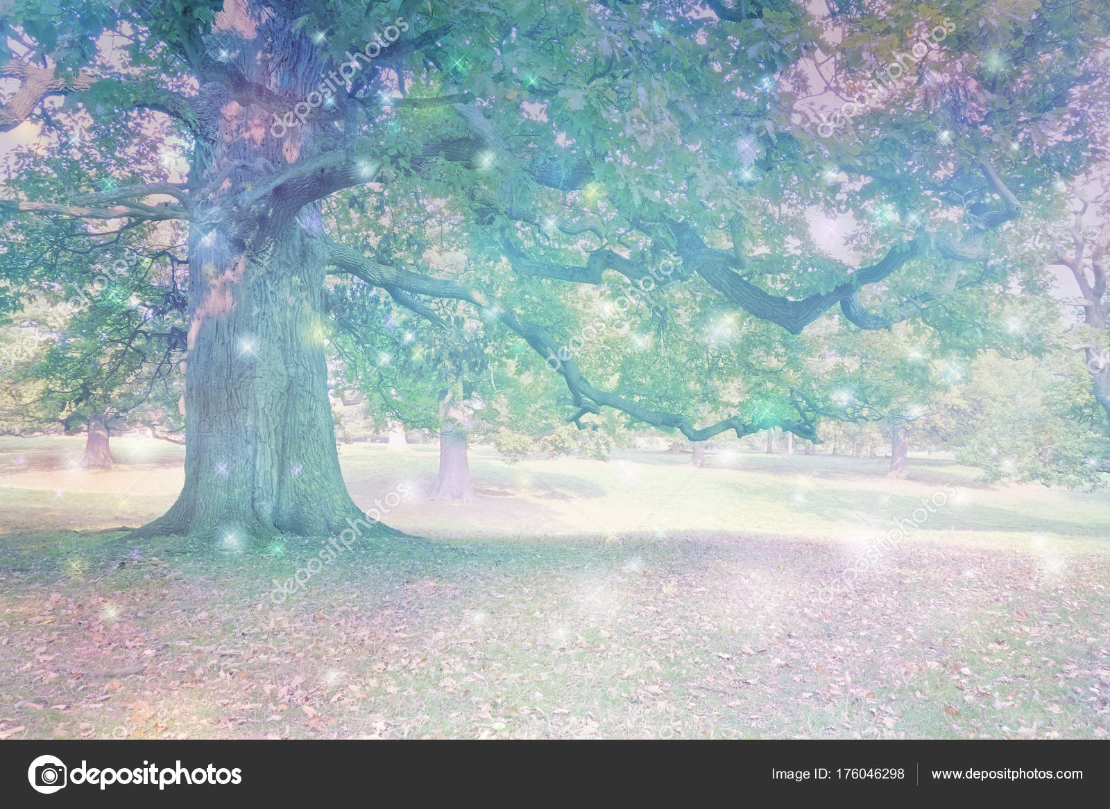 Spirit Orbs Attracted Ancient Oak Tree Big Old Oak Tree