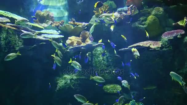 Fish on a coral reef, underwater