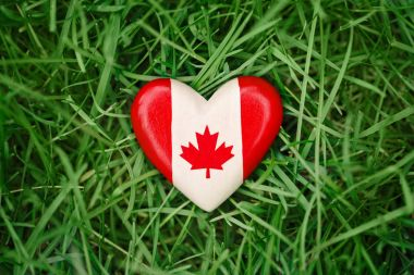 wooden small heart with red white canadian flag maple leaf lying in grass on green forest nature background outside, Canada day celebration