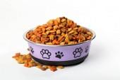 Kočka pes jídlo v misce