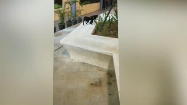 Na okně leží černá žlutooká kočka. Chlupatá černá kočka se dívá do okna. Krásná kočka na bílém pozadí. Kotě zamrká. Roztomilá kočka hýbe hlavou ze strany na stranu. Domácí mazlíčci koncept
