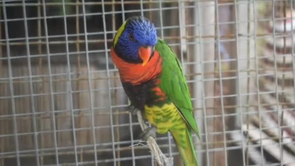 Akce šarlatových macaw ptáků na větvi stromu, krásné barevné papouščí ptactvo izolované v kleci na Želví ostrov na Bali Indonésie, Krásný papoušek na zeleném stromě v přírodním prostředí