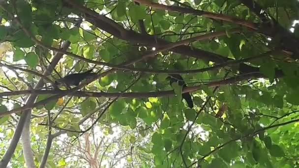 Varjak a fán reggelente