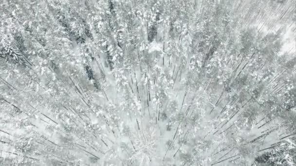 Letecký přelet zamrzlý zasněžený smrkový les