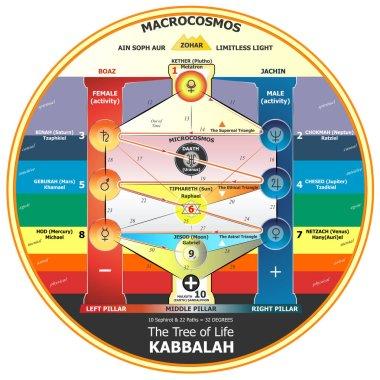 Tree of life kabbalah in vector illustration scheme