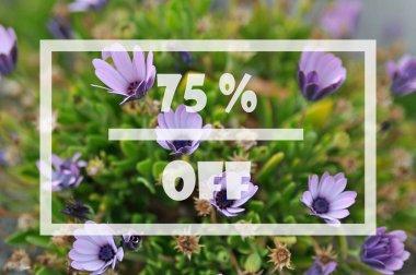 Spring sale 75 percent
