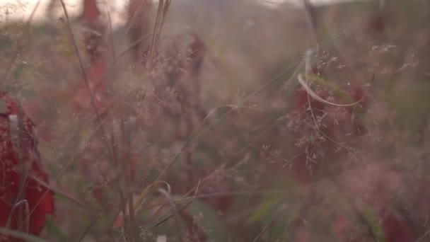 Szenische Aufnahmen von Wildblumen auf der Waldwiese im Herbst