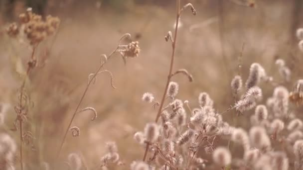 malebné záběry divokých květin na lesní louce na podzim
