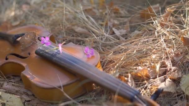 Kleine Kinder spielen Geige auf Gras im Park