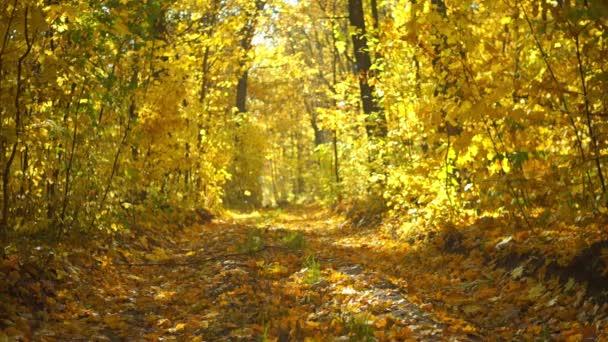 Szenische Aufnahmen von Bäumen mit goldenen Blättern im herbstlichen Park