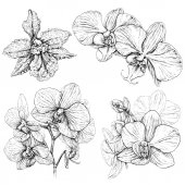Fényképek Kézzel rajzolt szett orchidea virágok