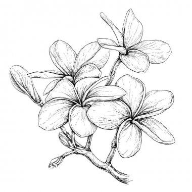 """Картина, постер, плакат, фотообои """"тропические цветы ожерелья розы модульные природа минимализм"""", артикул 130386104"""