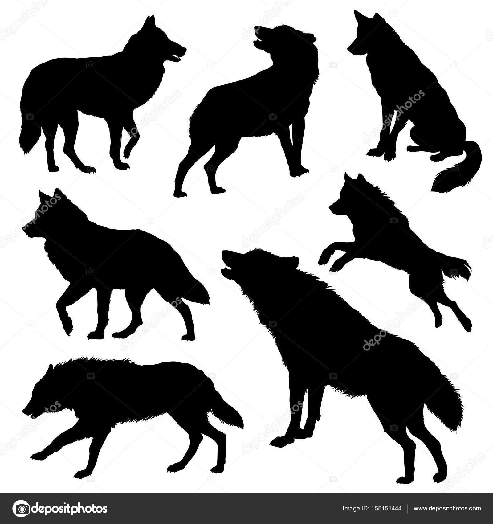 conjunto de silhueta lobo vetor de stock diana pryadieva 155151444