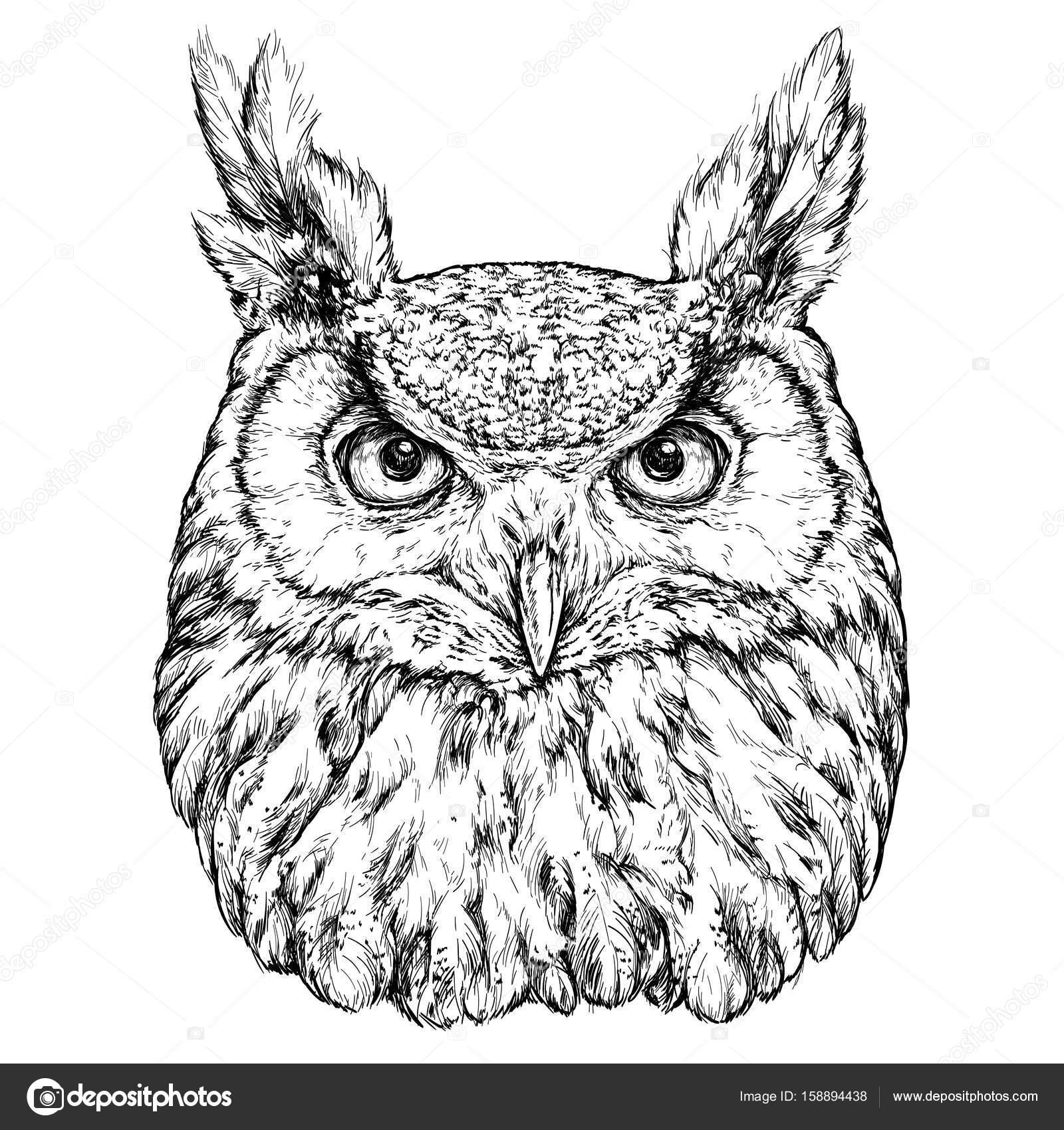 картинка совы черно-белая