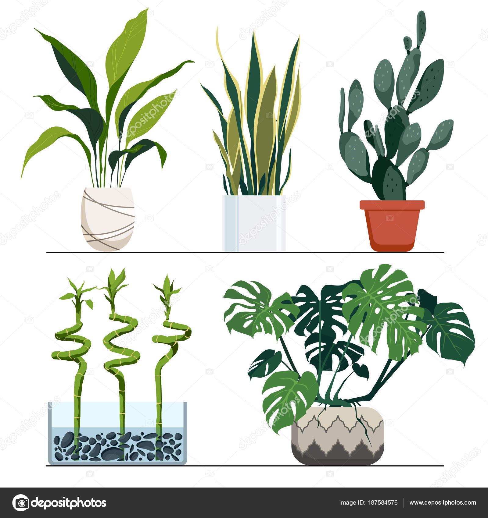 Insieme piante vaso vettoriale illustrazione disegnata for Piante arredamento moderno