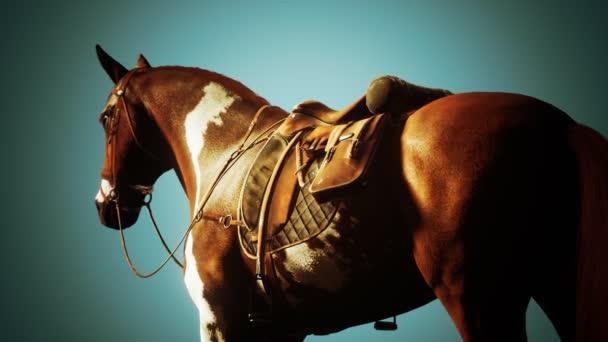 Sedlo s třmeny na hřbetě koně