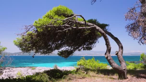 záběr ohnutý nad borovicí nad skalnatým břehem křišťálově čistá tyrkysová voda na řeckém ostrově řecká dovolená léto středomořská příroda a pobřeží