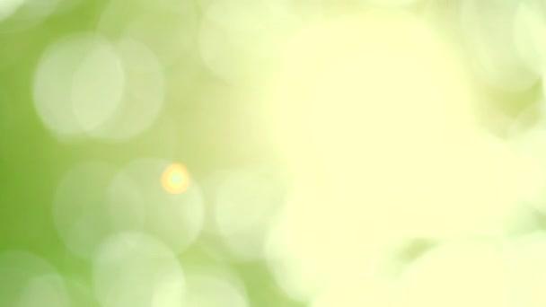 Jarní bokeh příroda, abstraktní pozadí, zelené listy rozmazané krásně na jaře nebo v létě, jsou zelené bokeh, který vybírá zaměření listů ze stromů rozmazat.
