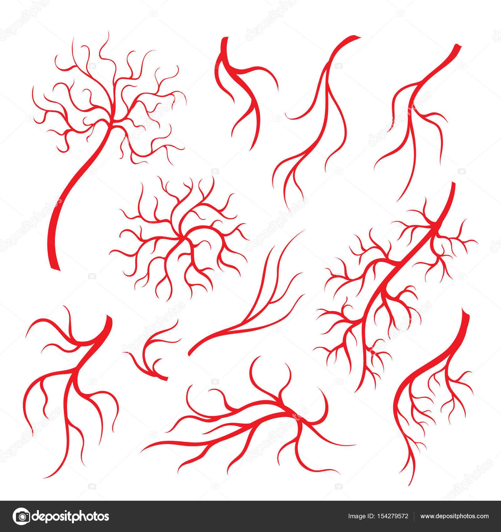 Venas del ojo humano, los capilares rojos, la sangre arterias ...