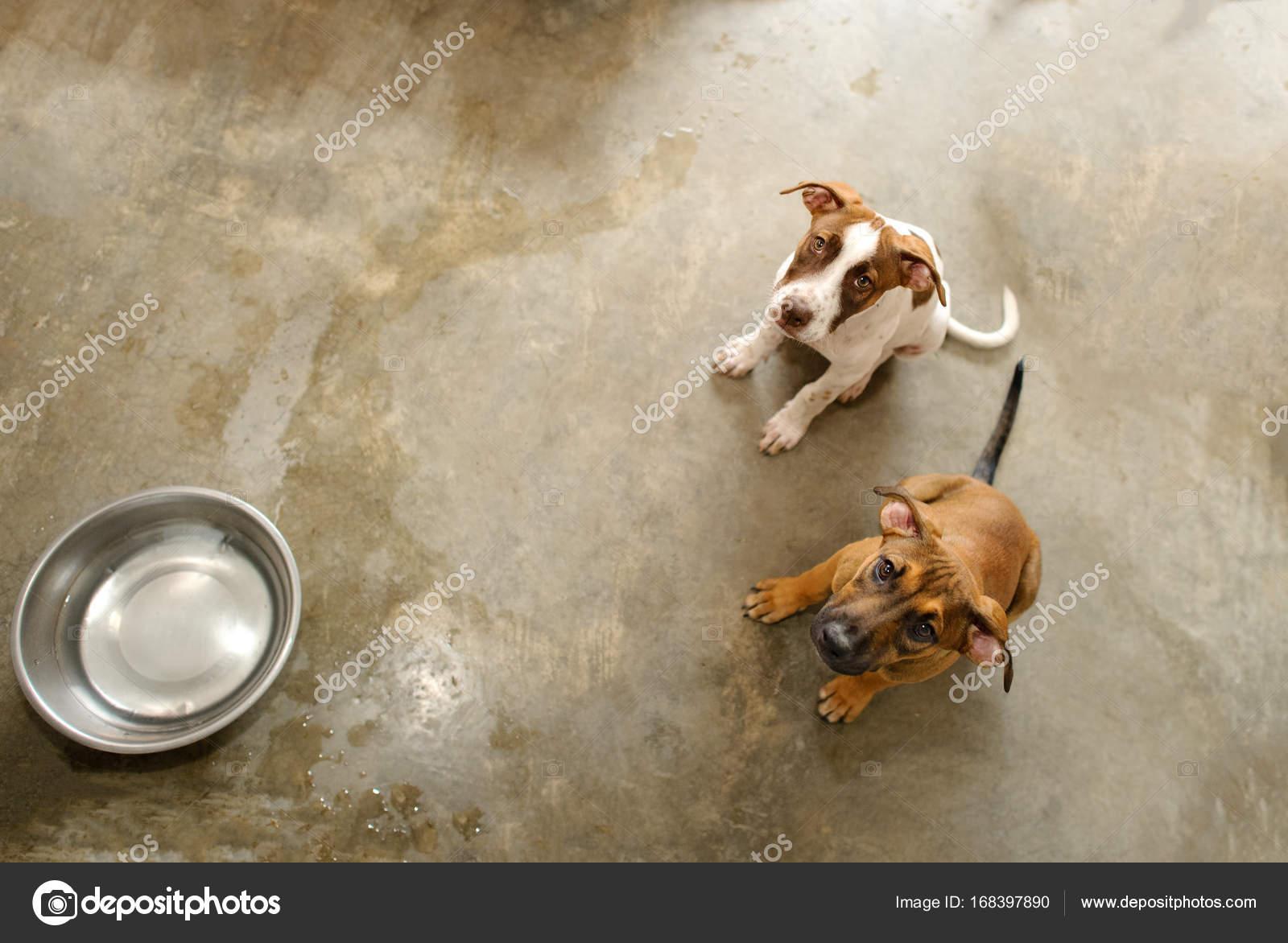 cba3a29c849e Καταφύγιο σκύλων είναι ένα καταφύγιο ζώων με δύο χαριτωμένα σκυλιά  κοιτώντας ψηλά θέλουν κάποιον να τους πάρει σπίτι — Εικόνα από mexitographer
