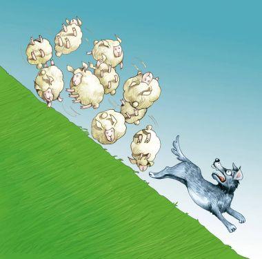 Overwhelming mass sheep