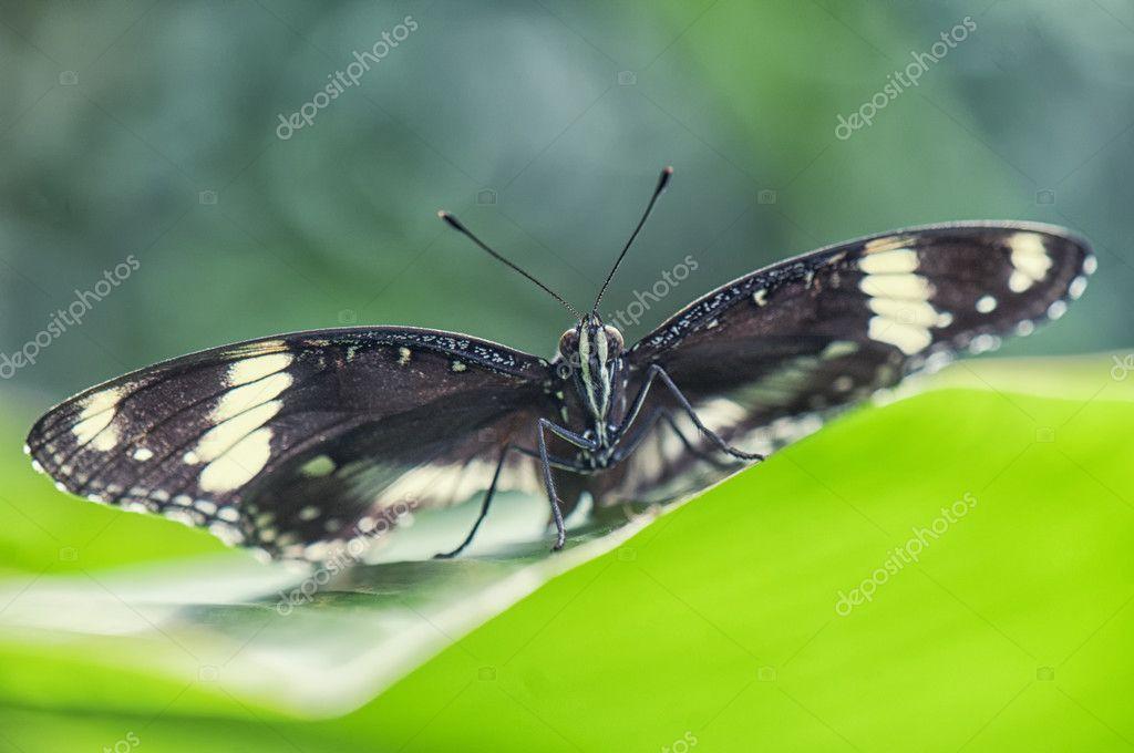 Butterfly eyes macro detail