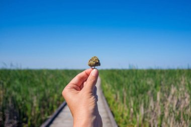 Hand holding cannabis bud agains trail and blue sky landscape