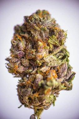 Detail of dried cannabis flower (grandaddy purple strain) isolat
