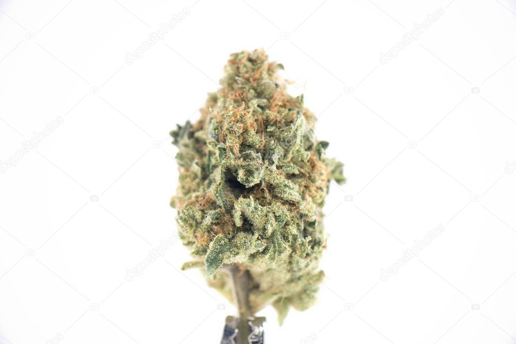 Single cannabis bud (ob reaper strain) isolated on white -
