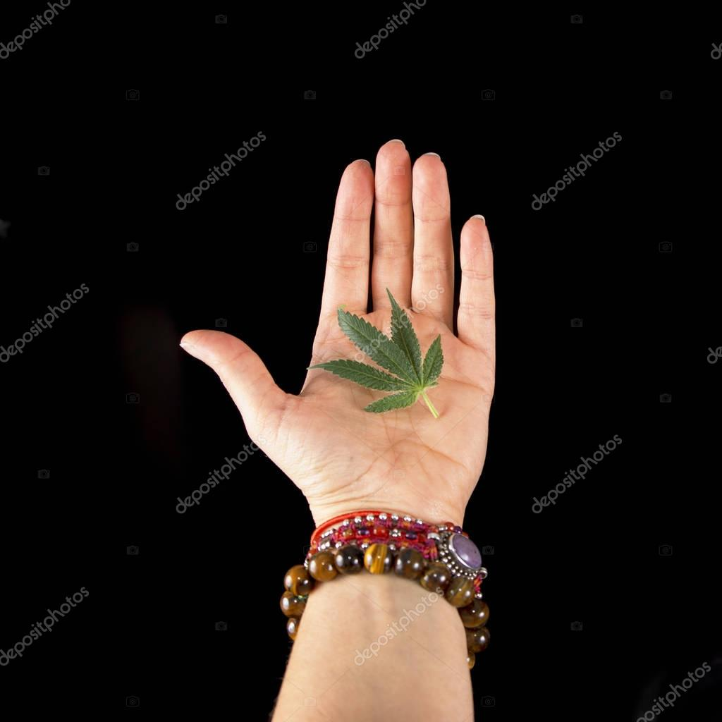 Female hand holding small cannabis leaf isolated over black back