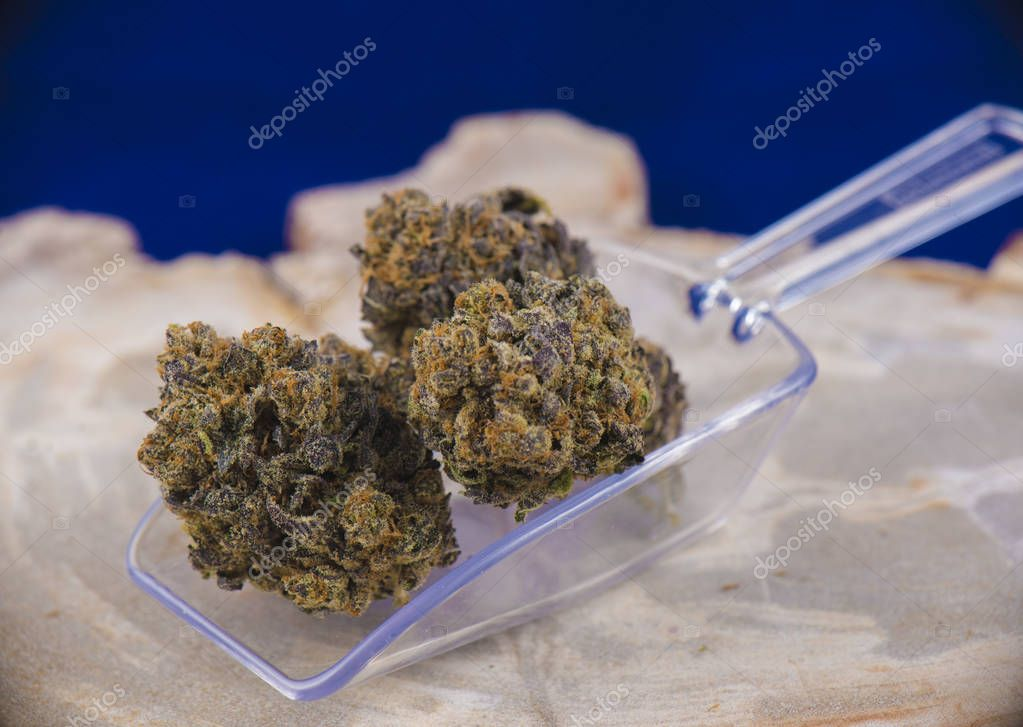 cannabis buds (deep purple strain) - medical marijuana dispensar