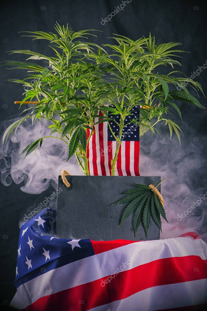 Cannabis plant and american flag with copyspace - veteran theme