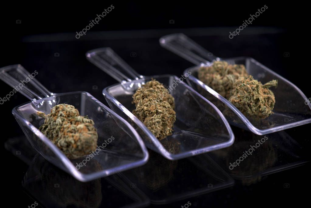 Three cannabis buds isolated over white - marijuana dispensary c