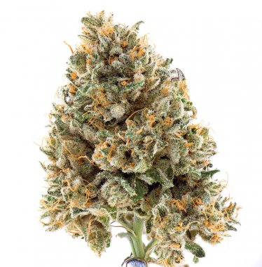 Dried cannabis flower (mangolope strain) isolated over white