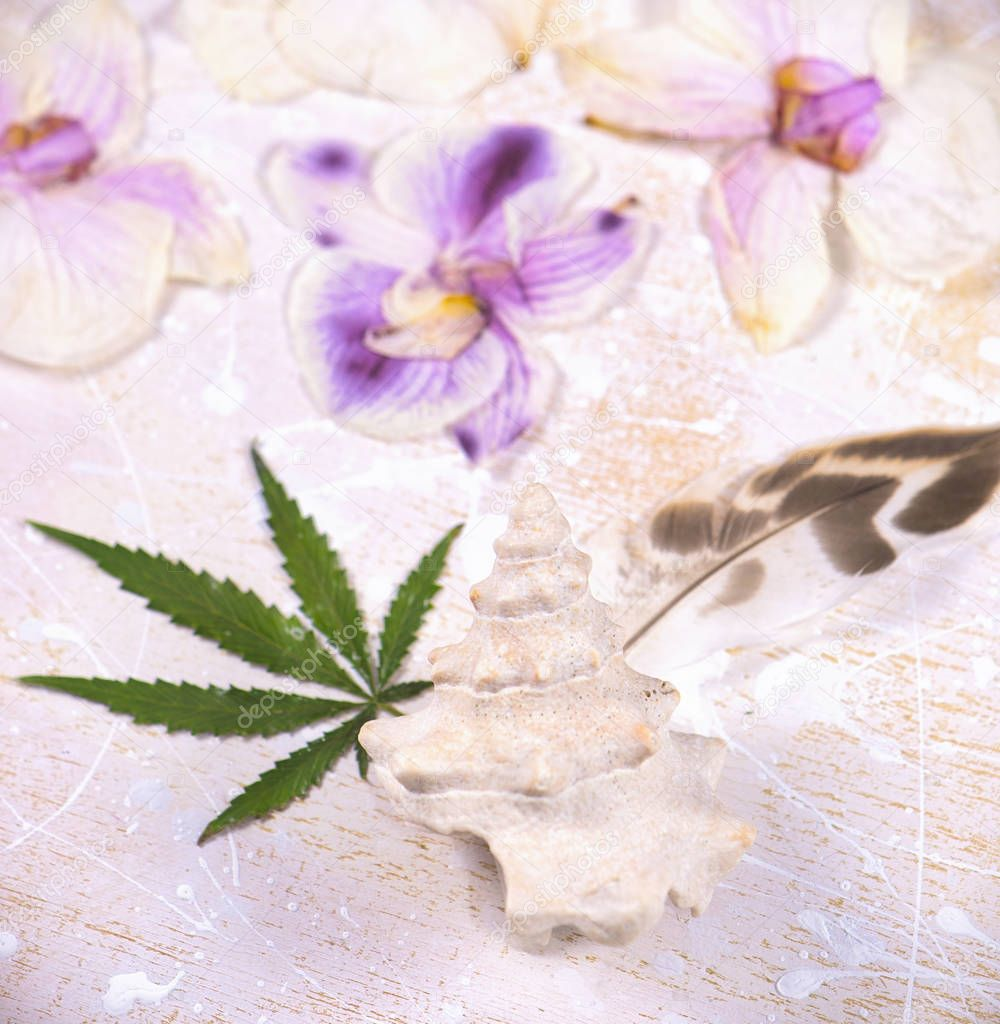 Cannabis leaves, shells and dried pink orquid petals isolated ov