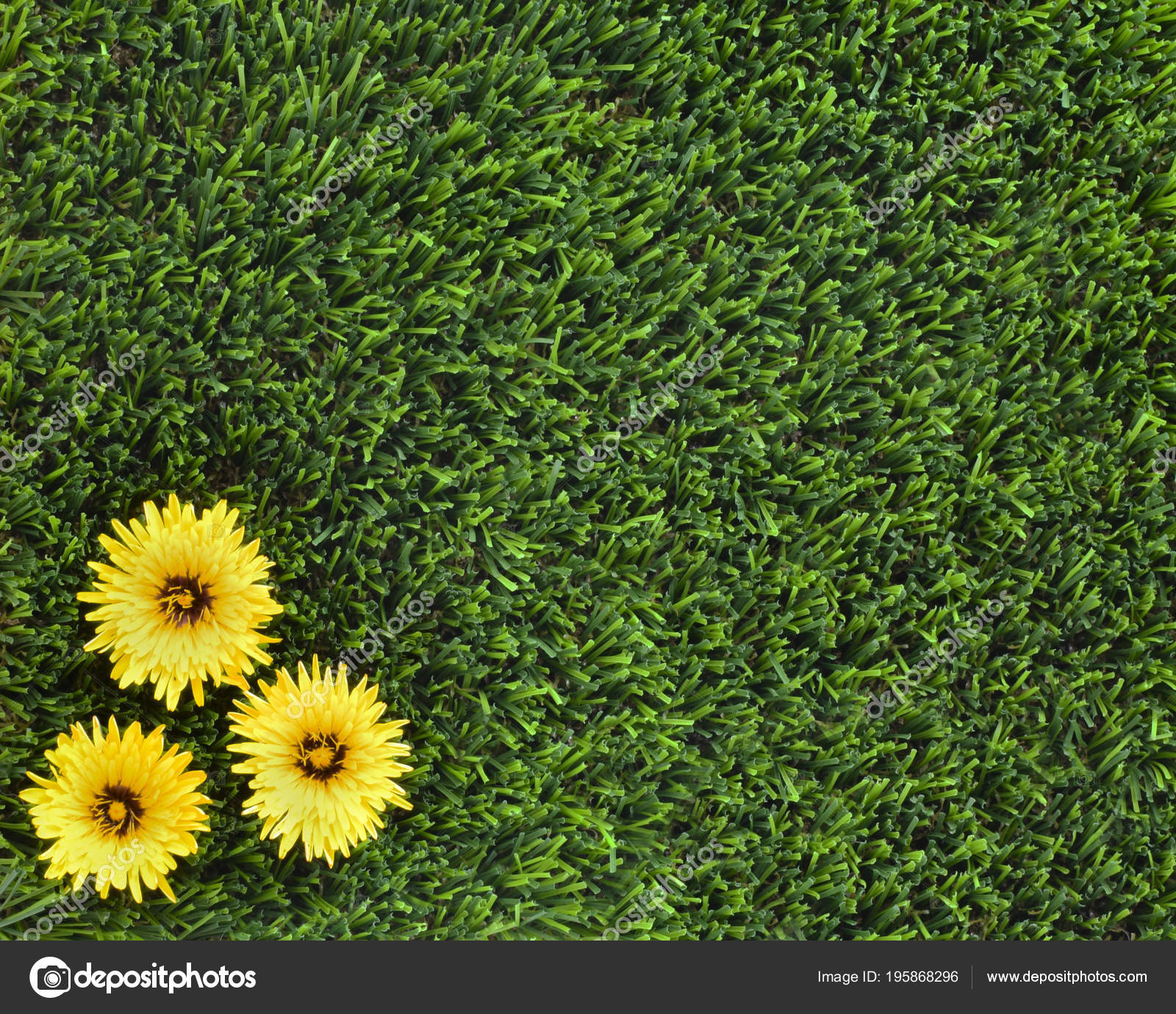 Copy Space Background Concept Weeds Garden Pretty Yellow Flowers