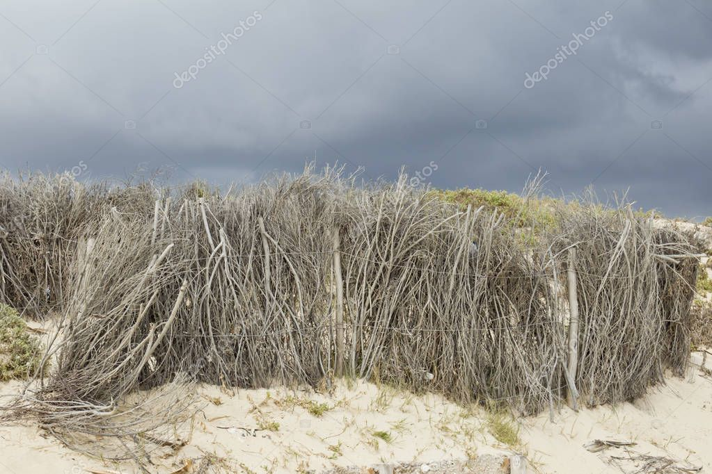 Dry branches on the beach