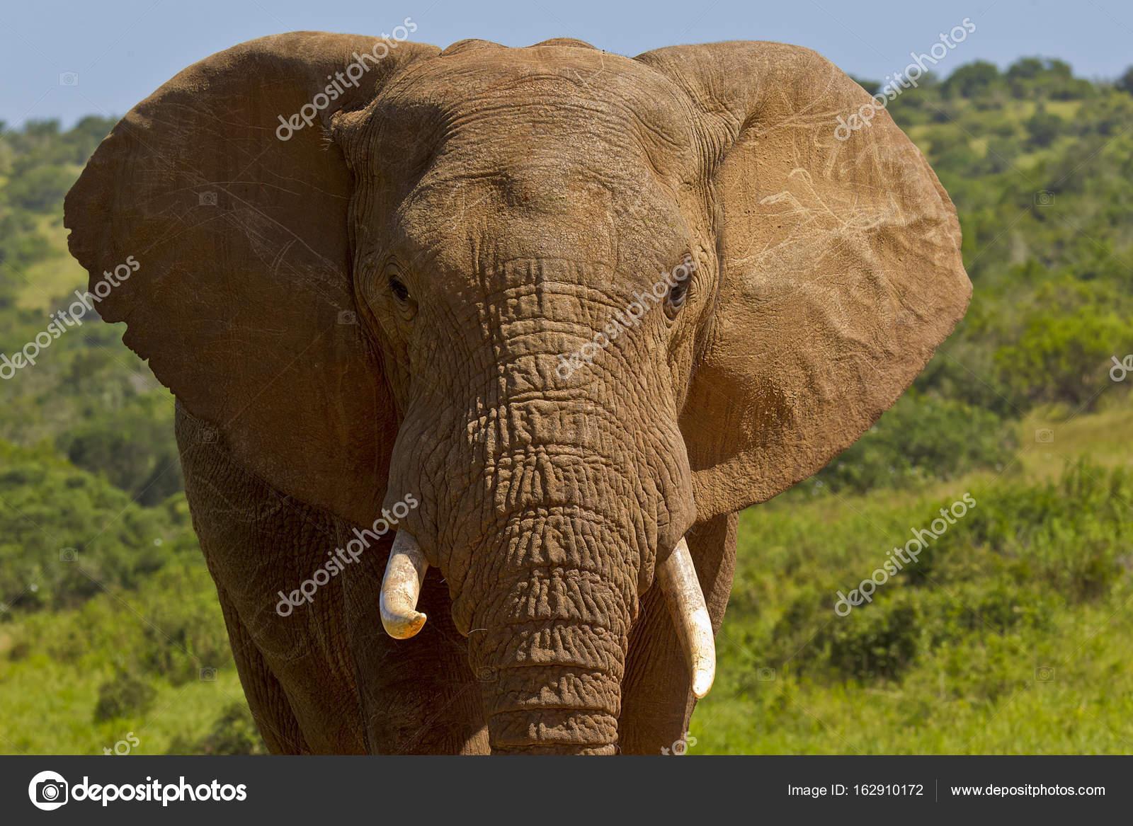 Que Significa El Elefante De Tres Cabezas Retrato De Cabeza Y Los