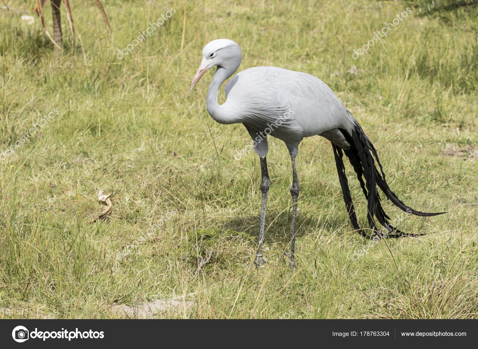 Μεγάλο παχύ πουλί εικόνες