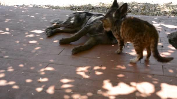 Abstraktní a konceptuální přátelství, pes a kočka si hraje, odstín
