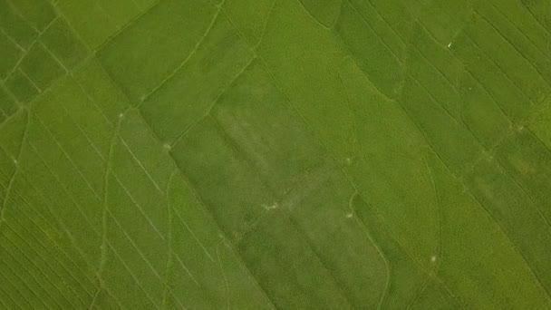 Nagyszerű kilátás nyílik a nagy rizs rizsföldek Nanggulan, Kulonprogo, Yogyakarta, Indonézia