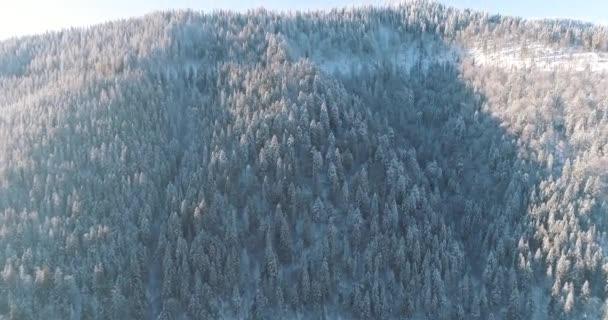 Dron záběry sníh pokryté stromy, zima příroda krásná Evropa letecký pohled borovice les hora, sezóna cestování bílá mražené příroda idylický 4k