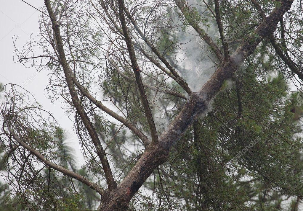 Smoking tree and power lines