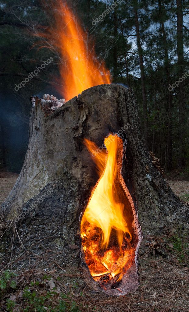 Rising flames from a tree stump