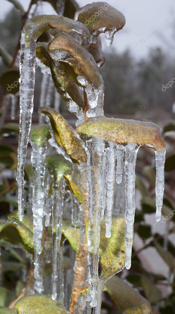 Post ice storm