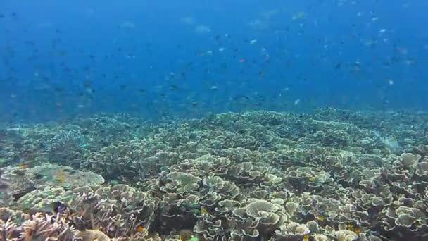 neporušený korálový útes s tvrdými korály a různými tropickými rybami úžasná rozmanitost druhů ryb