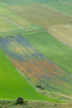CASTELLUCCIO DI NORCIA AND ITS FLOWERING BETWEEN MICRO-COLORS OF FLOWERS AND NATURE
