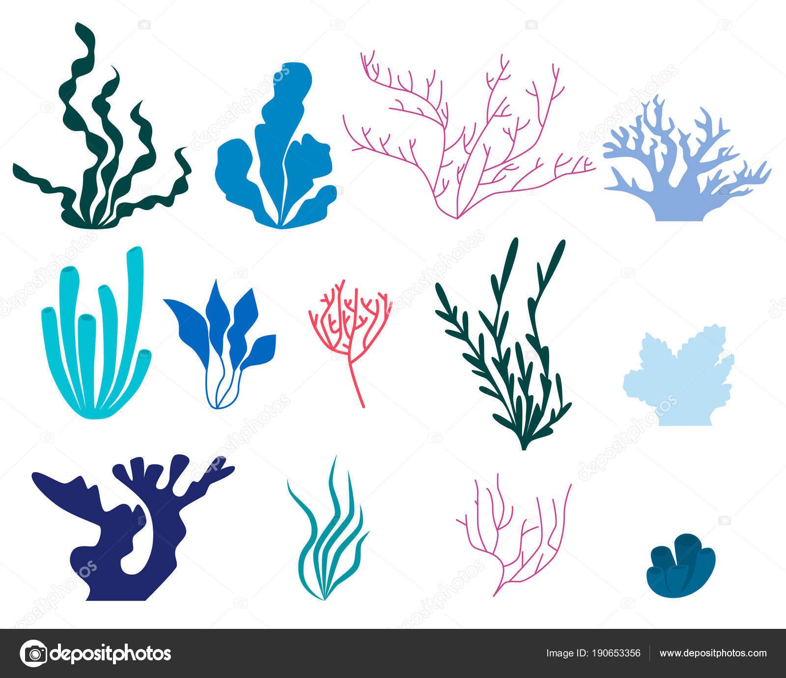 Insieme Degli Elementi Di Alghe E Coralli Vettoriali Stock
